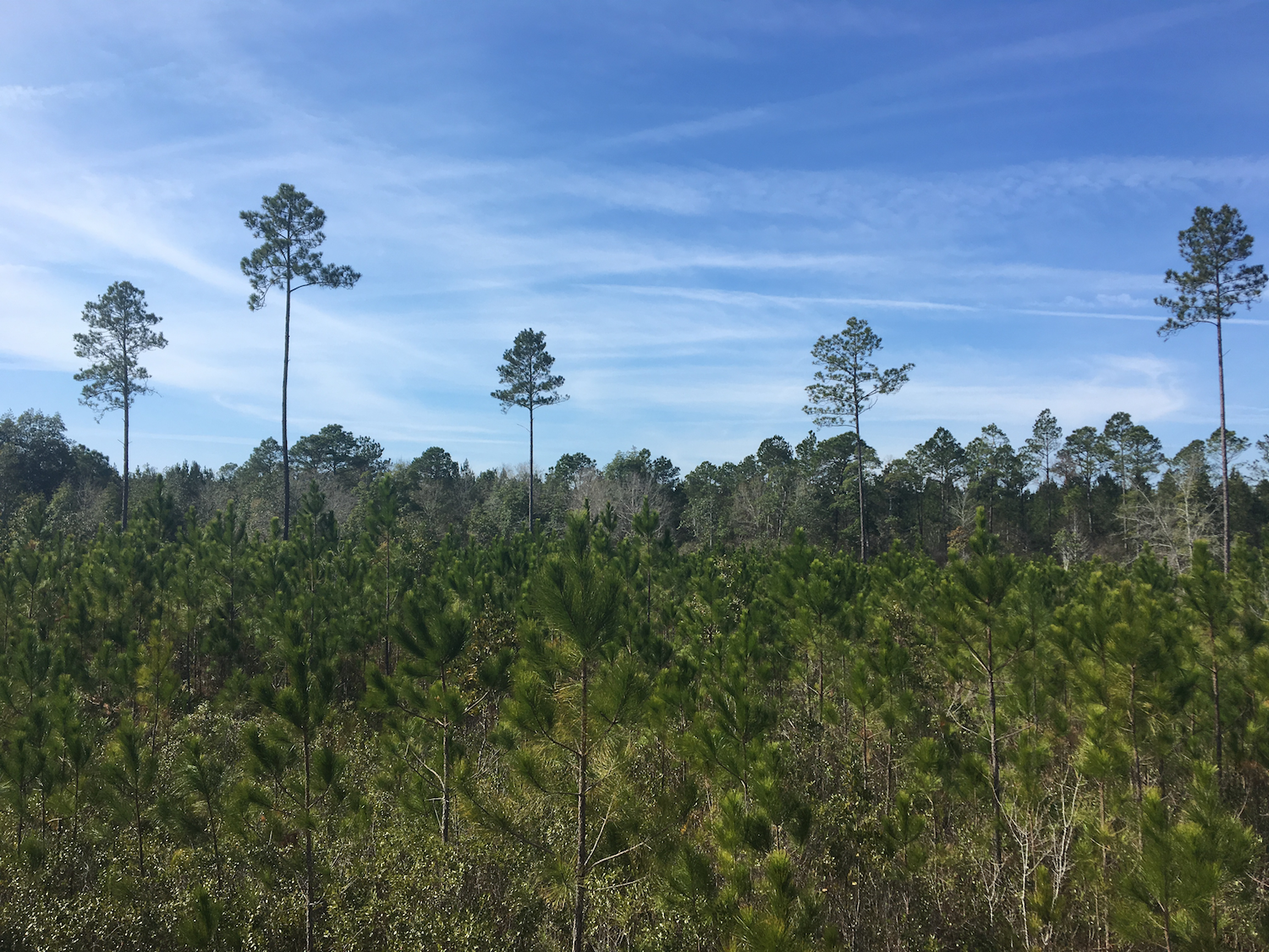 64 Acres Land in Millwood Plantation For Sale